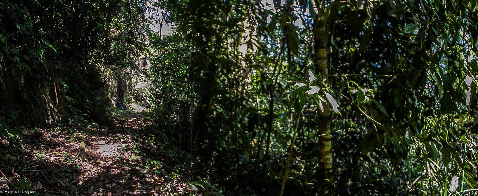 Las Cascadas-Los Yungas-2